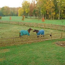 view of one of our horse pastures during fall