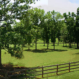 view of one of our horse pastures during summer